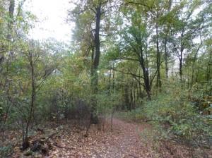 Wald und Steuergelder gerettet